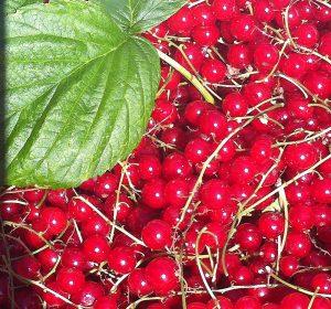 Austrian fruit