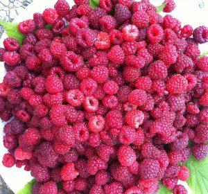 Raspberry in Vienna